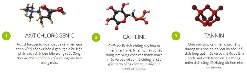 3 thành phần chính của green coffee