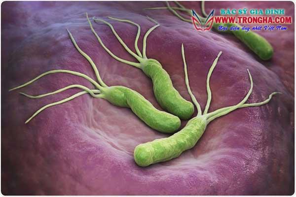 vi rút helicobacter pylori